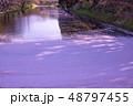 青森 弘前城の花筏 お濠に浮かんだ桜の花びら 観光船 48797455