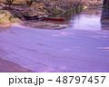 青森 弘前城の花筏 お濠に浮かんだ桜の花びら 観光船 48797457