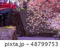 青森 弘前城の花筏 お濠に浮かんだ桜の花びら 赤い橋 下乗橋 48799753