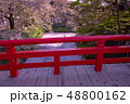 青森 弘前城の花筏 お濠に浮かんだ桜の花びら 赤い橋 下乗橋 48800162