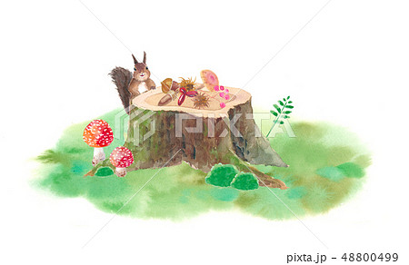 森の仲間たち-切り株とリスと木の実 48800499