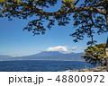 静岡県沼津市の大瀬崎(おせざき)から松の木と海越しの富士山の眺望 48800972