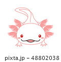 ウーパールーパー 全身 Axolotl アルビノ 48802038
