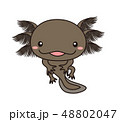 ウーパールーパー 全身 Axolotl ブラック  48802047