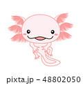 ウーパールーパー Axolotl ピンク 48802050