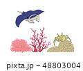 海の生き物_マンタとサンゴとカニ 48803004