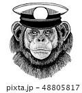 チンパンジー 船乗り ベクターのイラスト 48805817