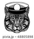 ねこ ネコ 猫のイラスト 48805898