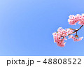 早春の河津桜と青空【福岡県】 48808522