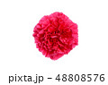 カーネーション 48808576