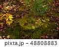 紅葉 秋 自然の写真 48808883