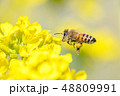 Honey bee hovering 48809991