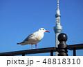 【東京都】カモメとスカイツリー 48818310