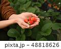 イチゴ イチゴ狩り イチゴを持つ手 48818626