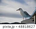 カモメ 海鳥 野鳥 48818627