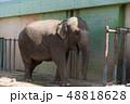 アジアゾウ 動物園 48818628