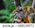 リスザル 猿 動物の写真 48819071