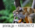 リスザル 猿 動物の写真 48819072