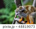 リスザル 猿 動物の写真 48819073