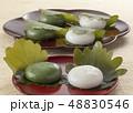 かしわ餅 48830546