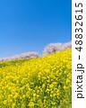 菜の花 桜 花の写真 48832615