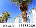 リゾートマンション 小網代 早春の写真 48833289