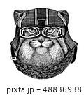 動物 アート 美術のイラスト 48836938