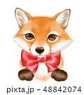 きつね キツネ 狐のイラスト 48842074