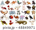 Set of animal character 48849971