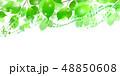 新緑 葉 緑 背景 48850608