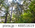 屋久島 ヤクスギランド 森の写真 48851619