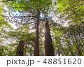 森 緑 ソーラーの写真 48851620