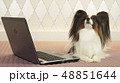 Papillon dog is lying near the laptop on bed 48851644
