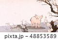 動物 さくら サクラのイラスト 48853589