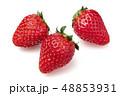 イチゴ 48853931
