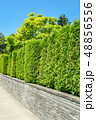 フェンス 垣根 柵の写真 48856556