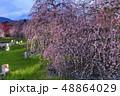 枝垂れ梅 鈴鹿の森庭園 梅の写真 48864029