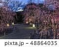 枝垂れ梅 鈴鹿の森庭園 梅の写真 48864035