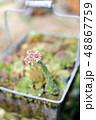 多肉植物 ディスプレイ サボテンの写真 48867759