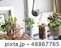 多肉植物 サボテン 植物の写真 48867765