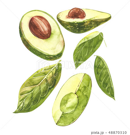 Avocado watercolor hand draw illustration isolated on white background. 48870310