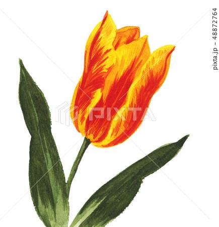 tulip19315pix7 48872764