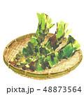 わさび 山葵 ワサビ  ざる 水彩 48873564