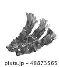 わさび 山葵 ワサビ 水墨画 モノトーン 48873565