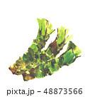 わさび 山葵 ワサビ 水彩 48873566