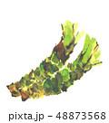 わさび 山葵 ワサビ 水彩 48873568