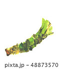 わさび 山葵 ワサビ 水彩 48873570