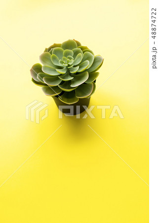 One lonely plastic succulent on yellow background 48874722