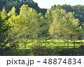 白樺の木立 48874834