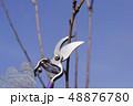 剪定 枝切り 枝打ちの写真 48876780
